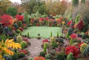 Autumn Jobs in the Garden