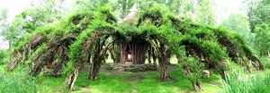 A Wonderful Living Structure