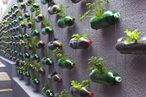 Bottle Garden Brazil
