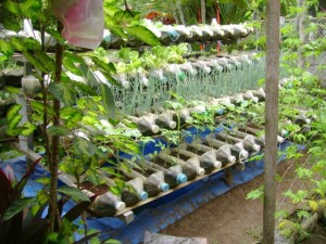 Bottle Farm