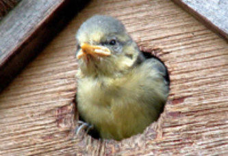 Nest Box Week
