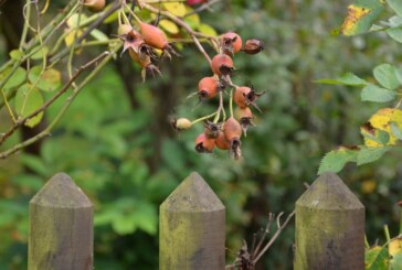 Prepping Your Garden For Winter