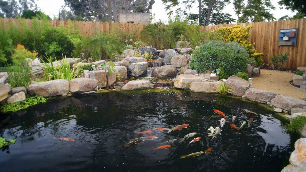 How to build a koi pond diy tips for Large koi pool